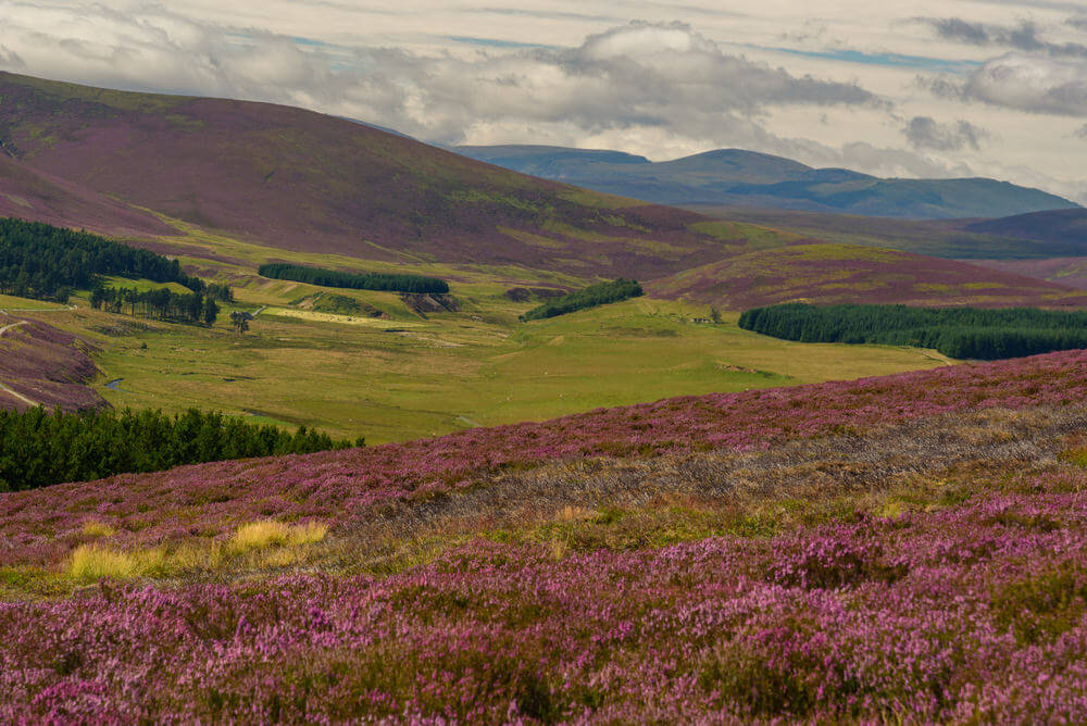 breathtaking landscapes in Europe. Scenic view of the beautiful nature of Cairngorms National Park in Scotland in summer