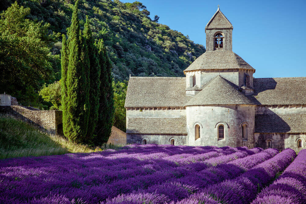 Lavender field in Gordes,, France