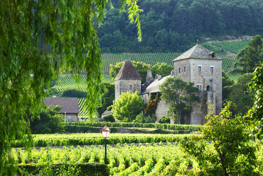 View of the vineyards in Gevrey Chambertin, France