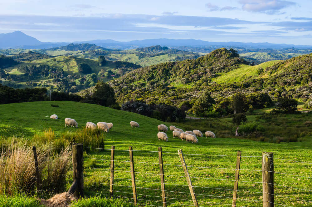 Discover New Zealand - Top 5 Places For Your New Zealand Bucketlist