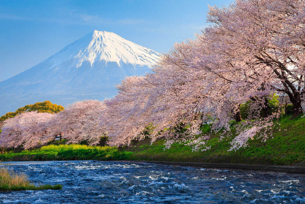 Mountain Fuji in spring at Kawaguchiko, japan and Cherry blossom Sakura, best places to visit in japan