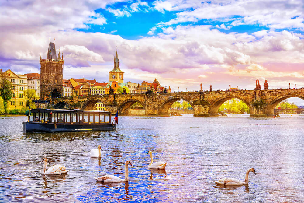 Swans floating on the Vltava River, Prague. Europe trip planner tool.