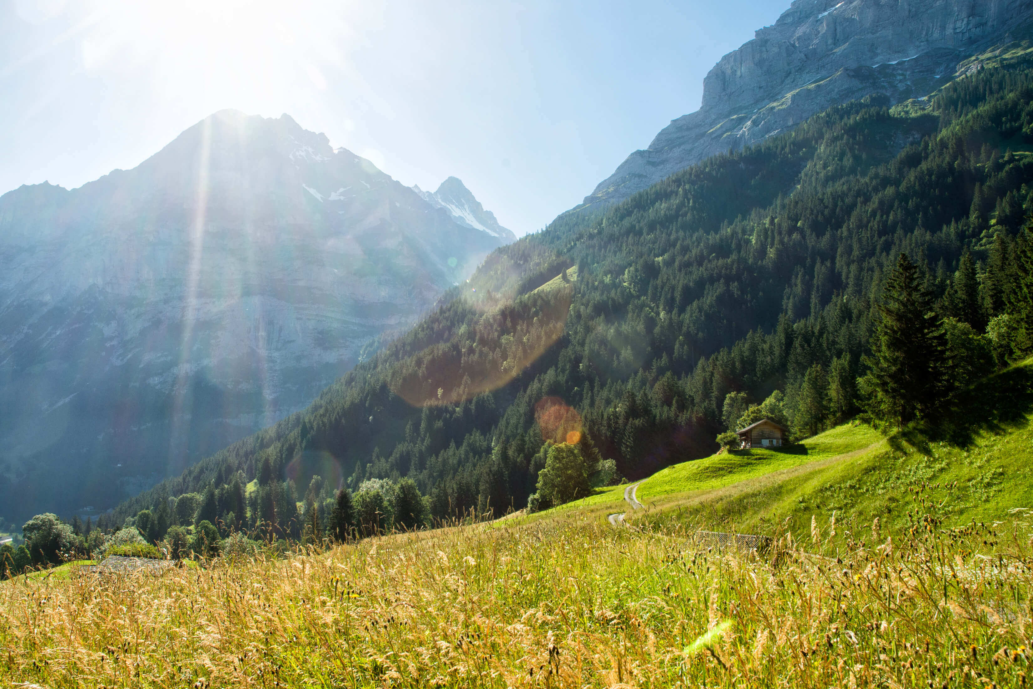 Summertime in Grindelwald's Alps