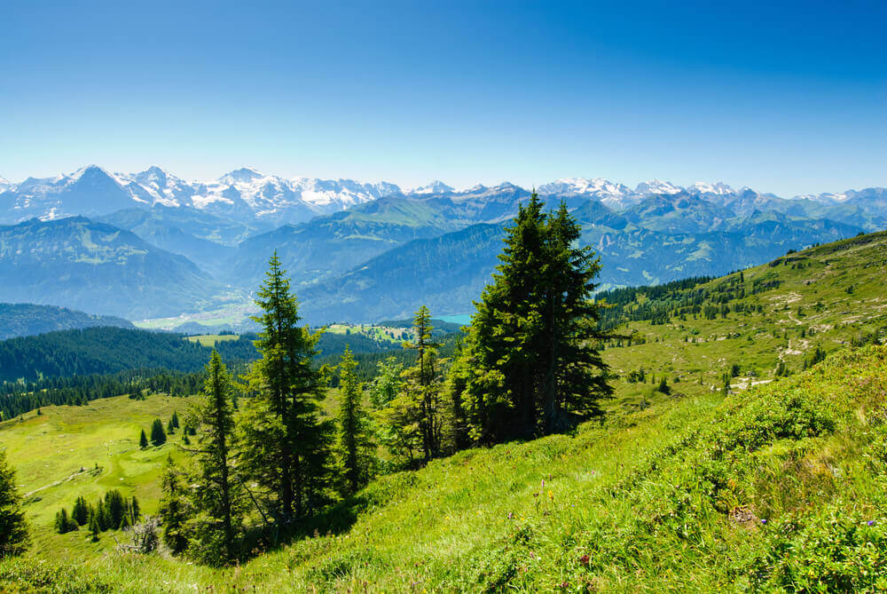 Panorama from Niederhorn in summer, Switzerland
