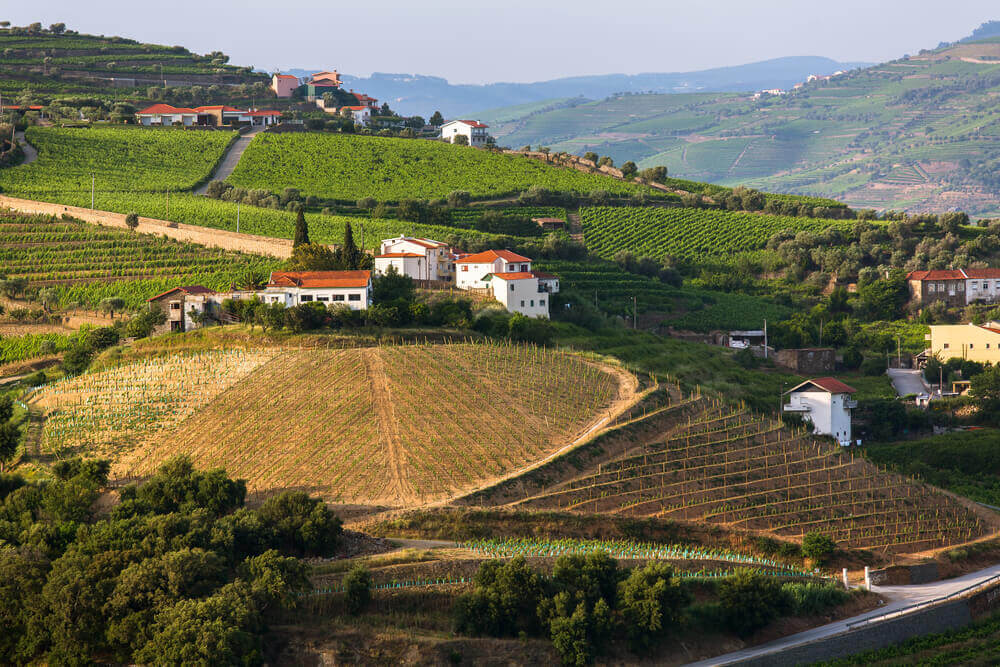 travel to europe. Douro Valley, Portugal. Top view of vineyards are on hills.