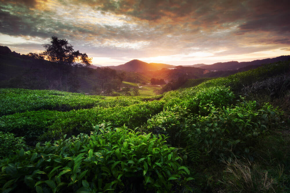 Tea Time! Plan my Route of the World's Coolest Tea Traditions