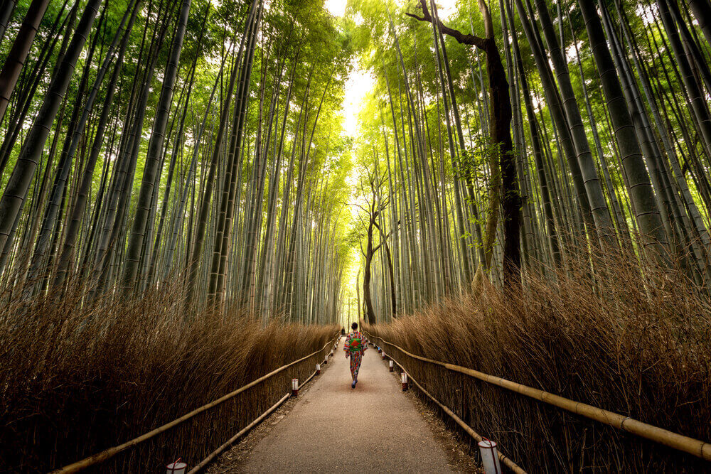 Arashiyama area in Autumm ,Kyoto Japan. touring plans