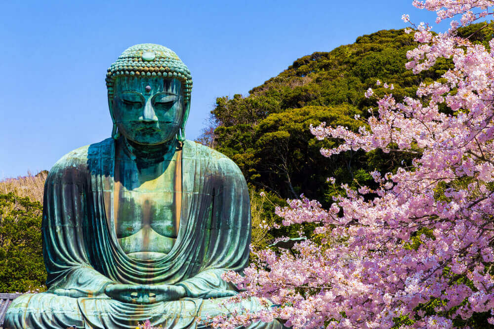 The Great Buddha in Kamakura Japan.The foreground is cherry blossoms.Located in Kamakura, Kanagawa Prefecture Japan. touring plans.